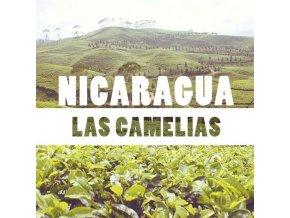 Nicaragua Las camelias